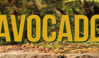 Dal primo album di Jah9, pubblicato il video di Avocado