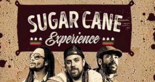 sugar-cane-tour